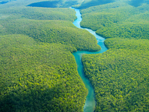 amazon-rainforest-river-aerial-view